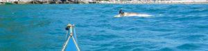La carcassa di un delfino
